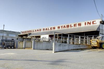 New Holland Sales Stable