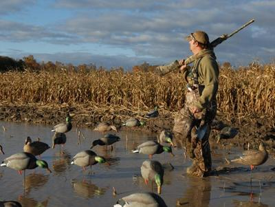 Forecast calls for record duck bounty