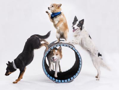 n21 mutts gone nuts 4 Dog Barrel.jpg
