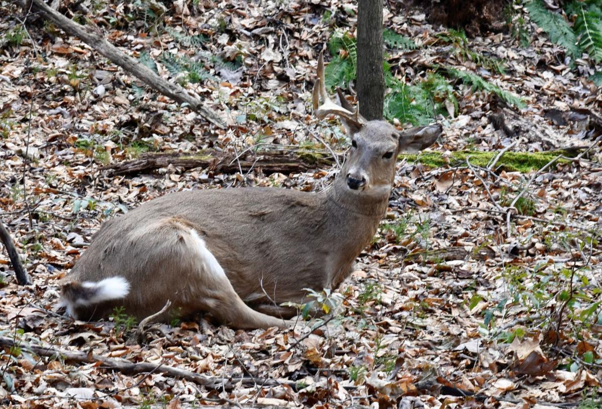 robo deer