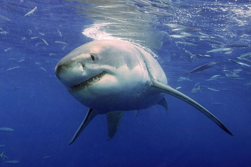 Experts Predict A Big Year For Shark Attacks Along New Jersey