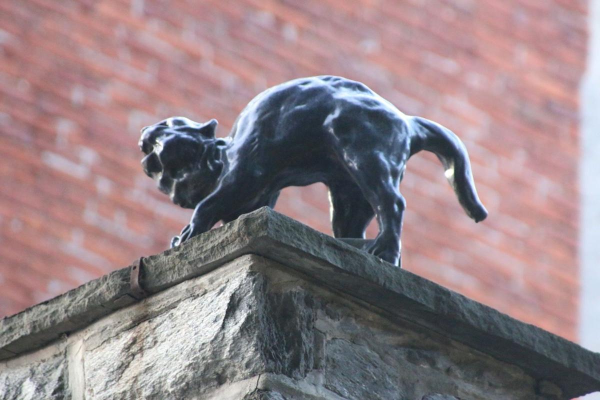black cat grotesque