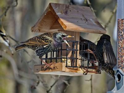 Bird Feeder Feb 23 2021