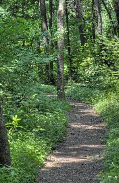 Exploring Landis Woods in Manheim Township