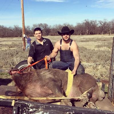 giant hog