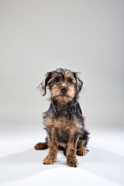 Puppy Bowl 2019: Meet the Pennsylvania pups   Food + Living