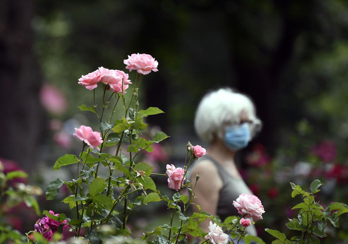 Buchanan Park Rose Garden