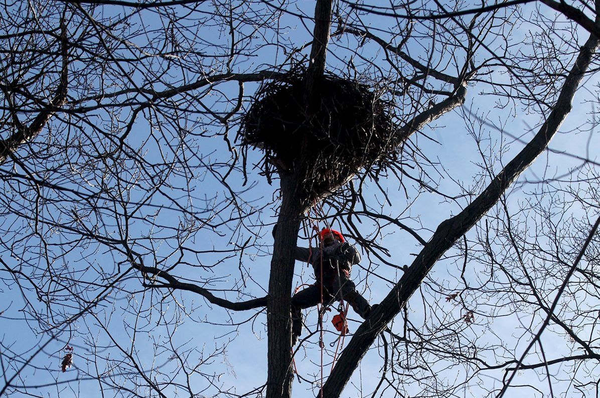 Eagles Nest York Pa >> How big is the stick home of Eagle Cam eagles Liberty and ...