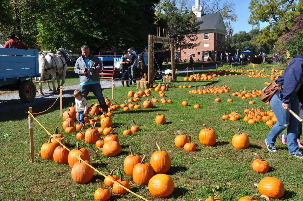 o10 lets begin harvest days pumpkin patch hunt 2.JPG