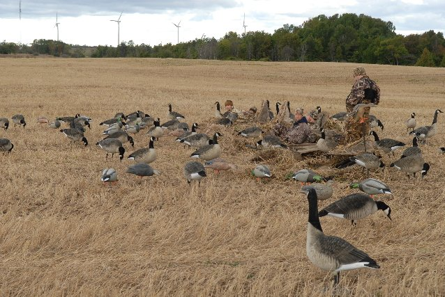 Waterfowl Gathering Sports Lancasteronline Com