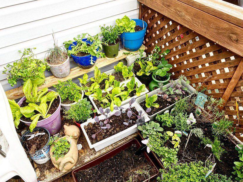 Social distancing gardens