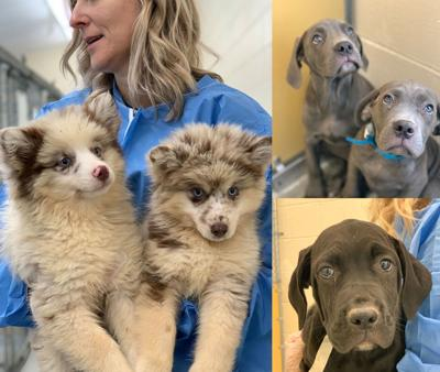 PSPCA rescues dogs from Narvon