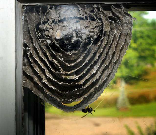 Hornet Nest A Sight To See In Salisbury News