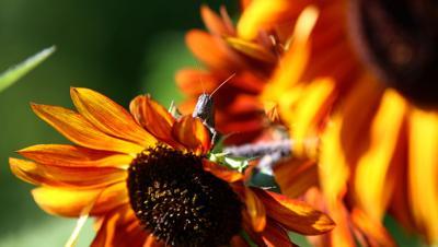 VIEWFINDER CGK grasshopper