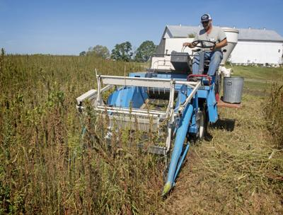Hemp Harvest PSU