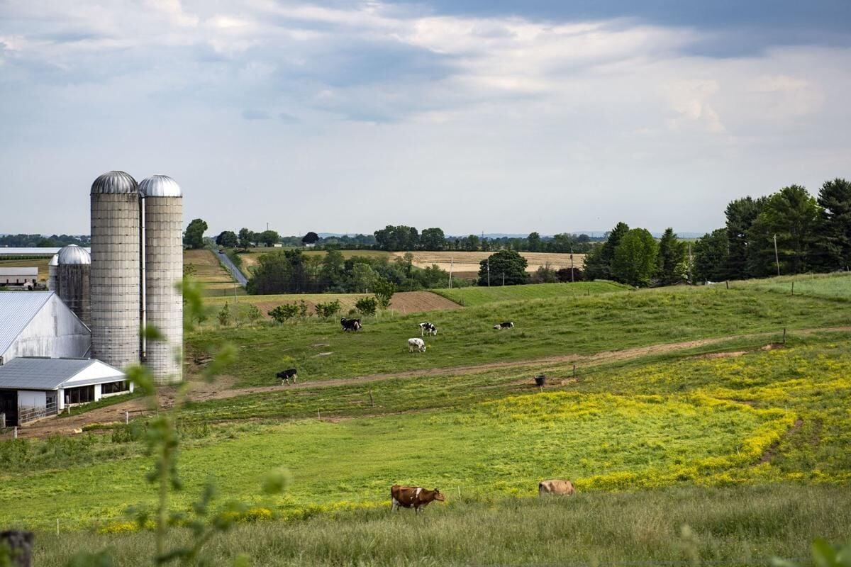 Southern lanco farm 2019