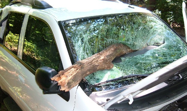 Tree Smashes Car Family Escapes News Lancasteronline Com