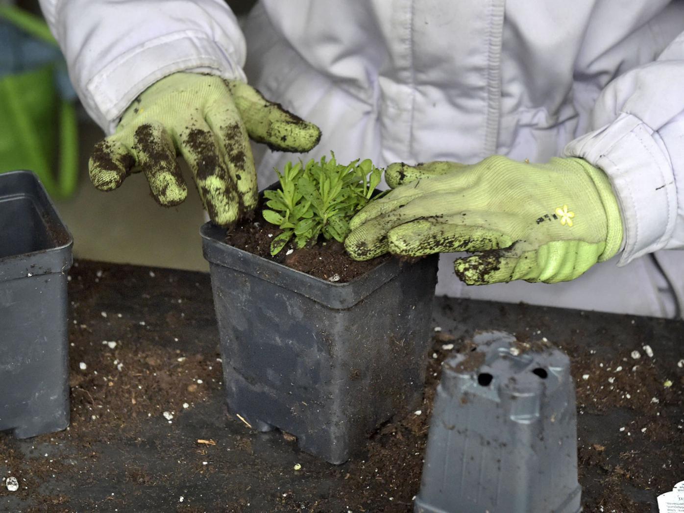 master gardeners02.jpg