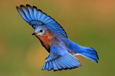 a12 outdoor story bird watching bluebird.jpg