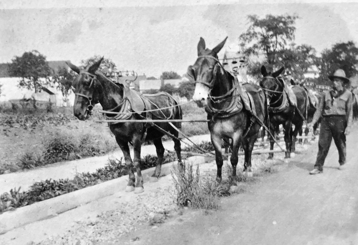mule 3.jpg