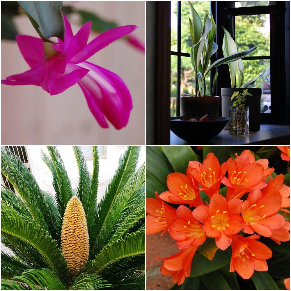 Cold-tolerant plants
