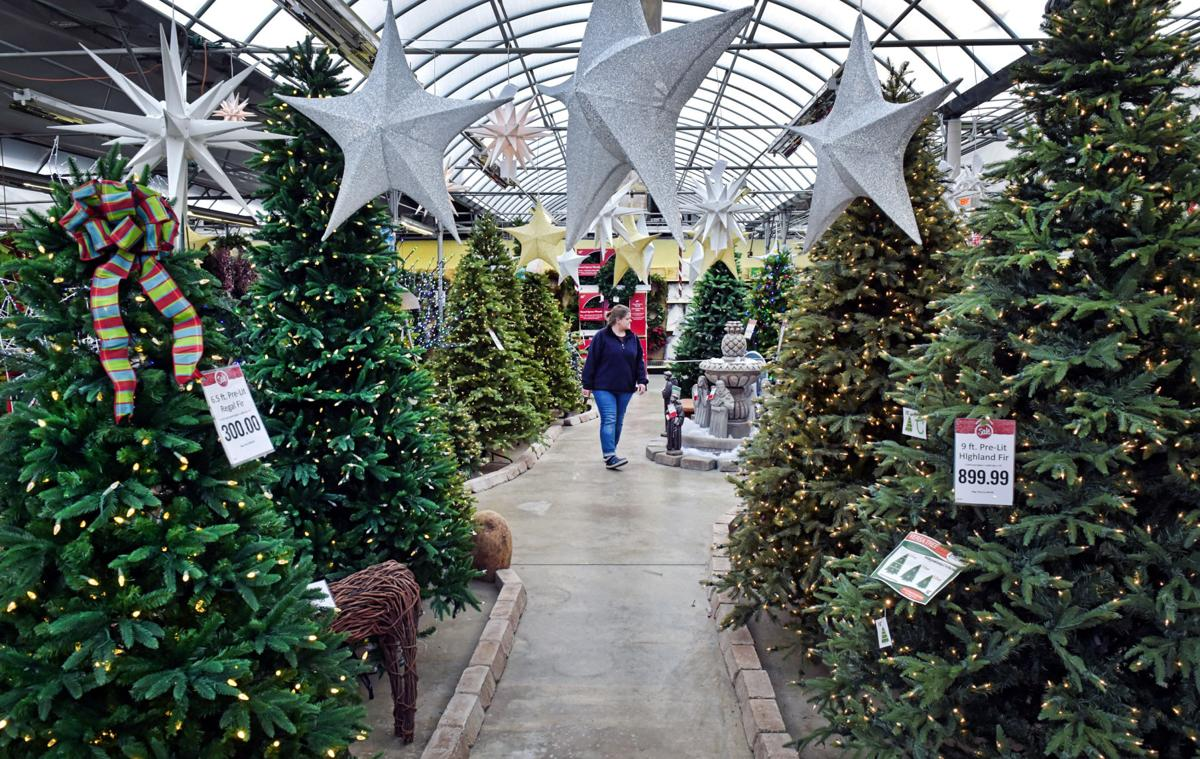 Lancaster County Christmas Tree Farmers Remain Optimistic