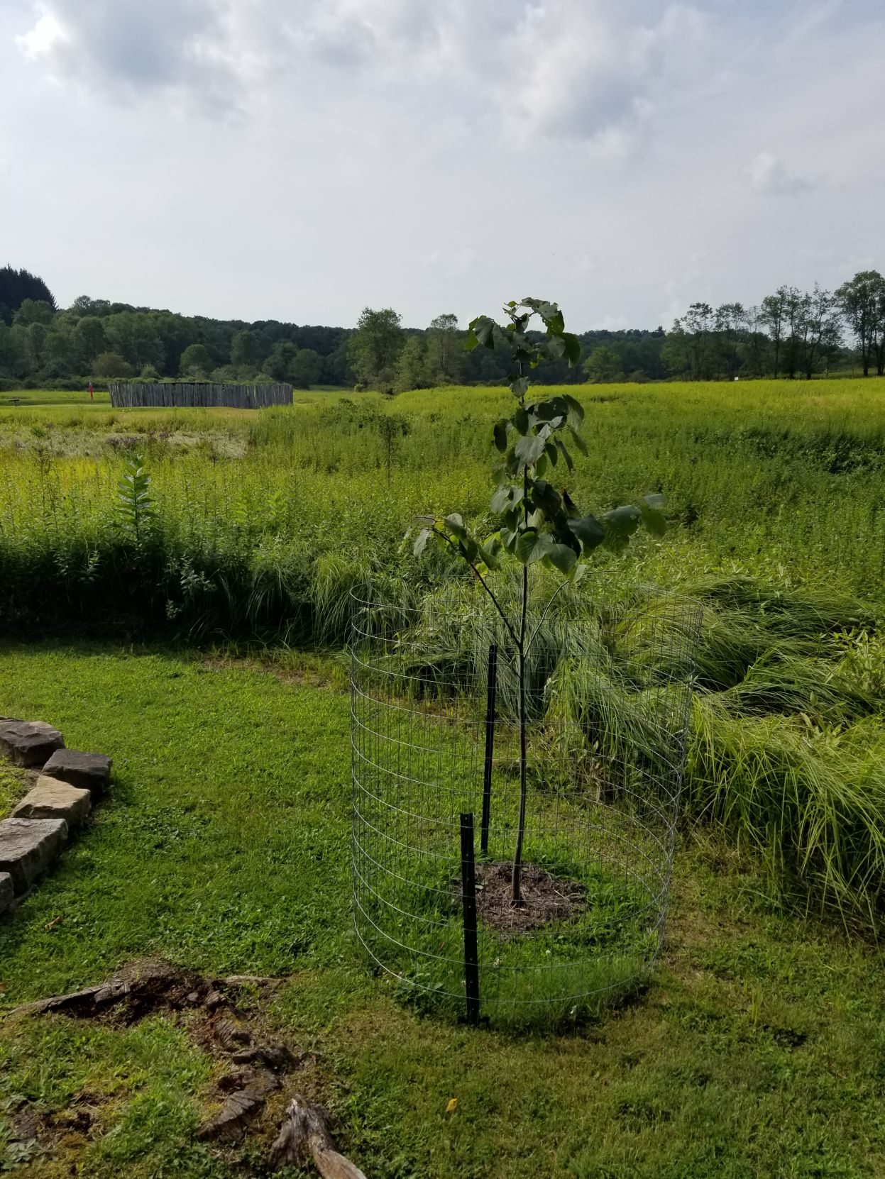 new tree with Fort Necessity Stockade in background.jpg