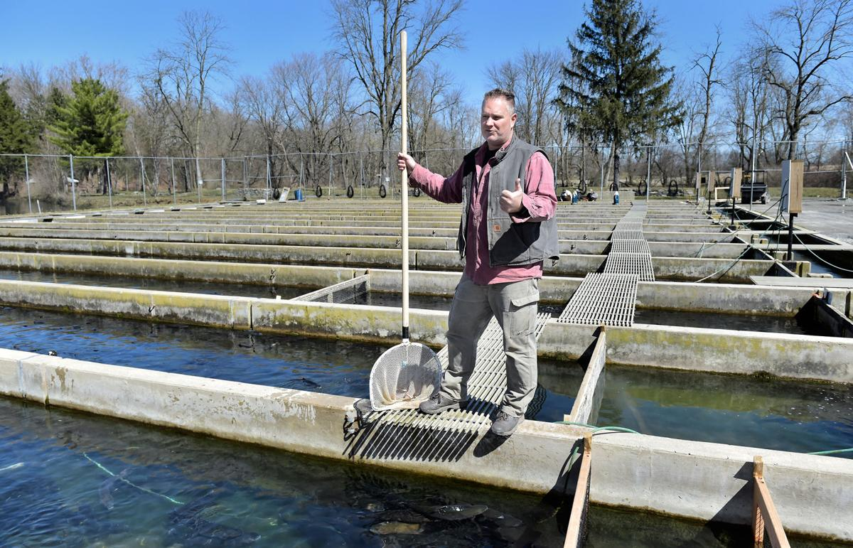 Trout grow for anglers, restaurants, markets at Limestone