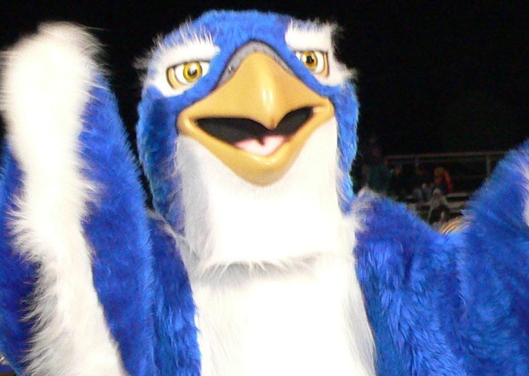 Cedar Crest Falcon