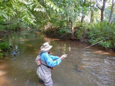 50 years of restoring Donegal Creek wild trout stream