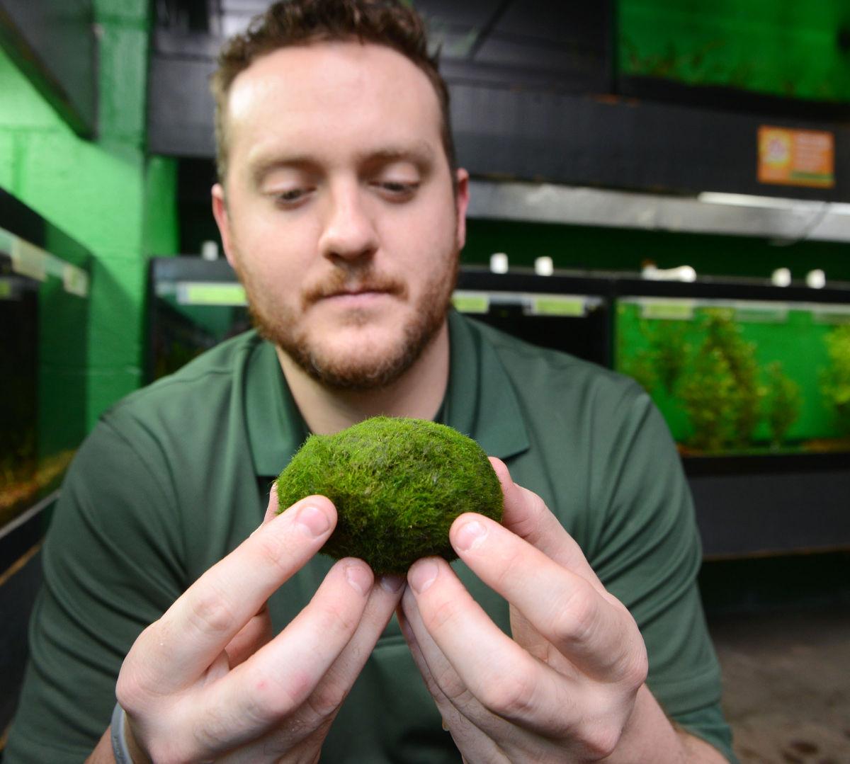 Moss balls 5