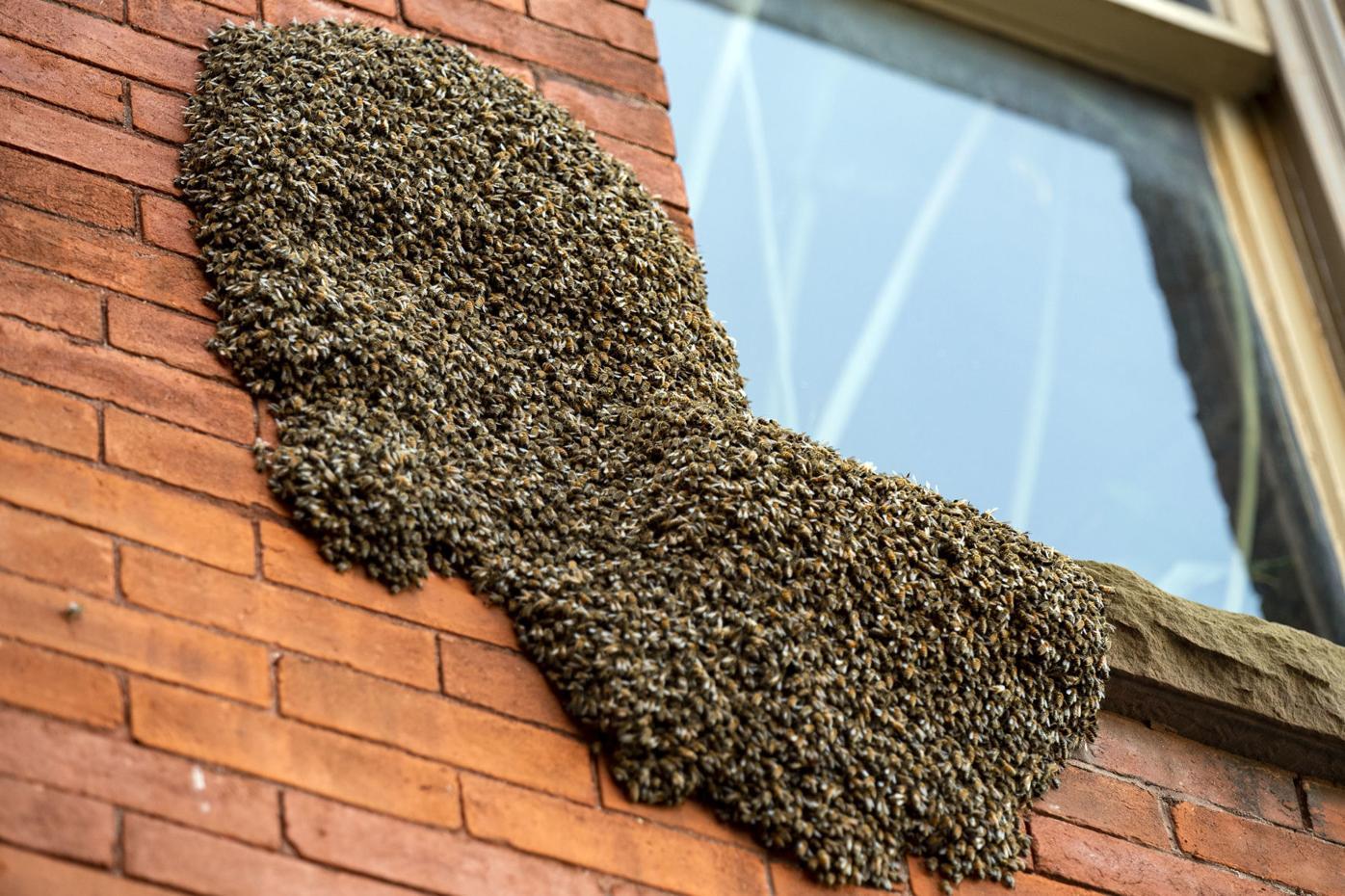 BeesOnBuilding