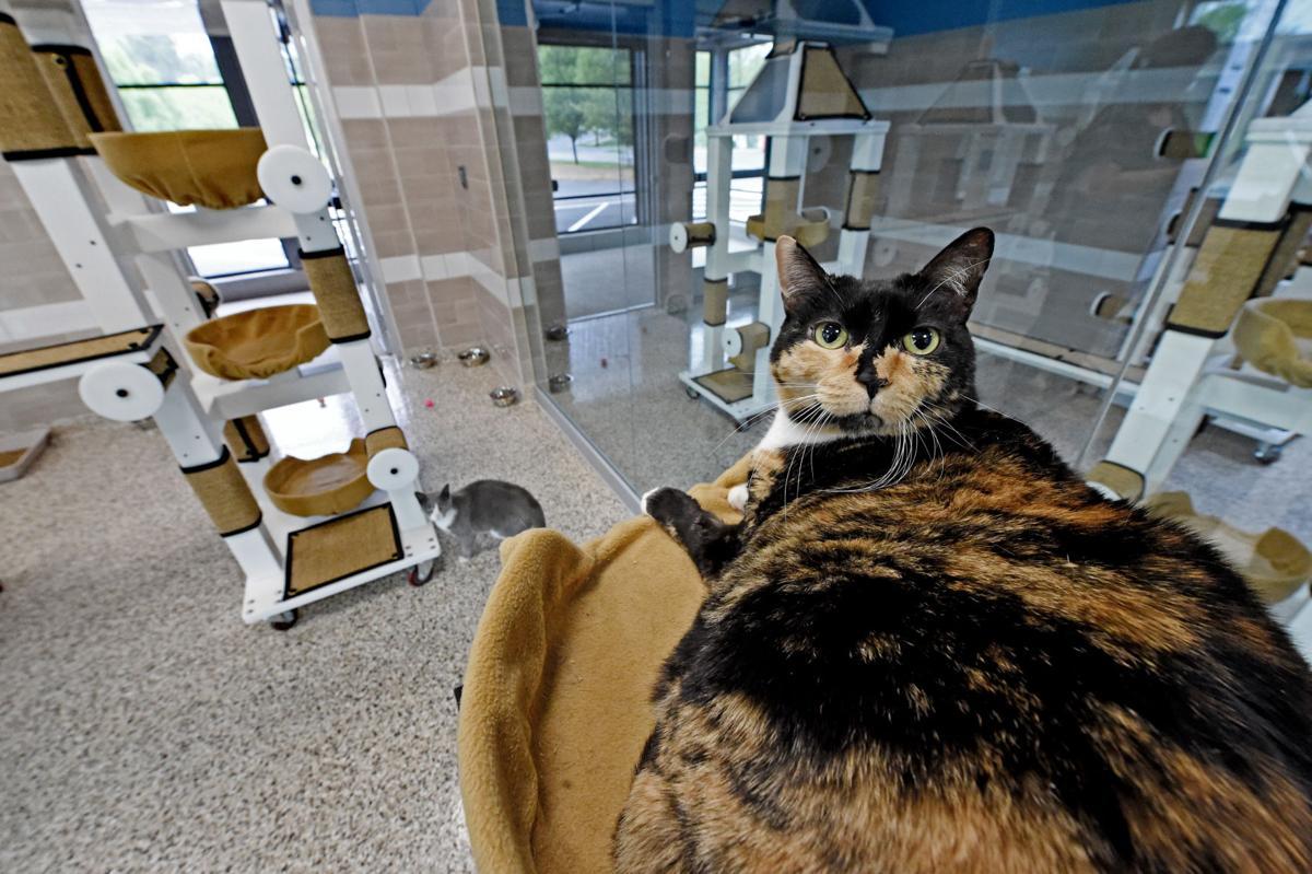 Columbia Animal Shelter