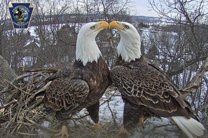 eagle nest single men over 50 Looking for the perfect eagles nest any price under $25 $25 to $50 $50 to $100 over $100 eagles nest decorative single toggle light.
