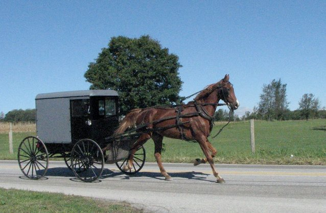 Horse pulling buggy killed by gunshot in drive-by shooting