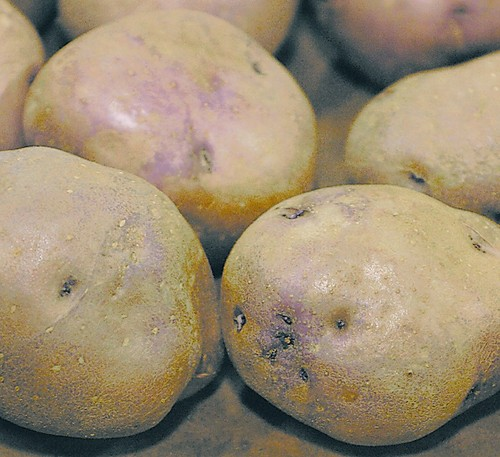 Keep Your Eyes Peeled For Potato Variety Lifestyle