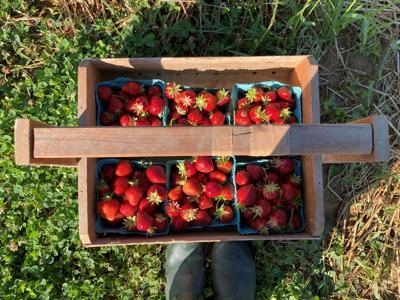 Strawberry pyo basket