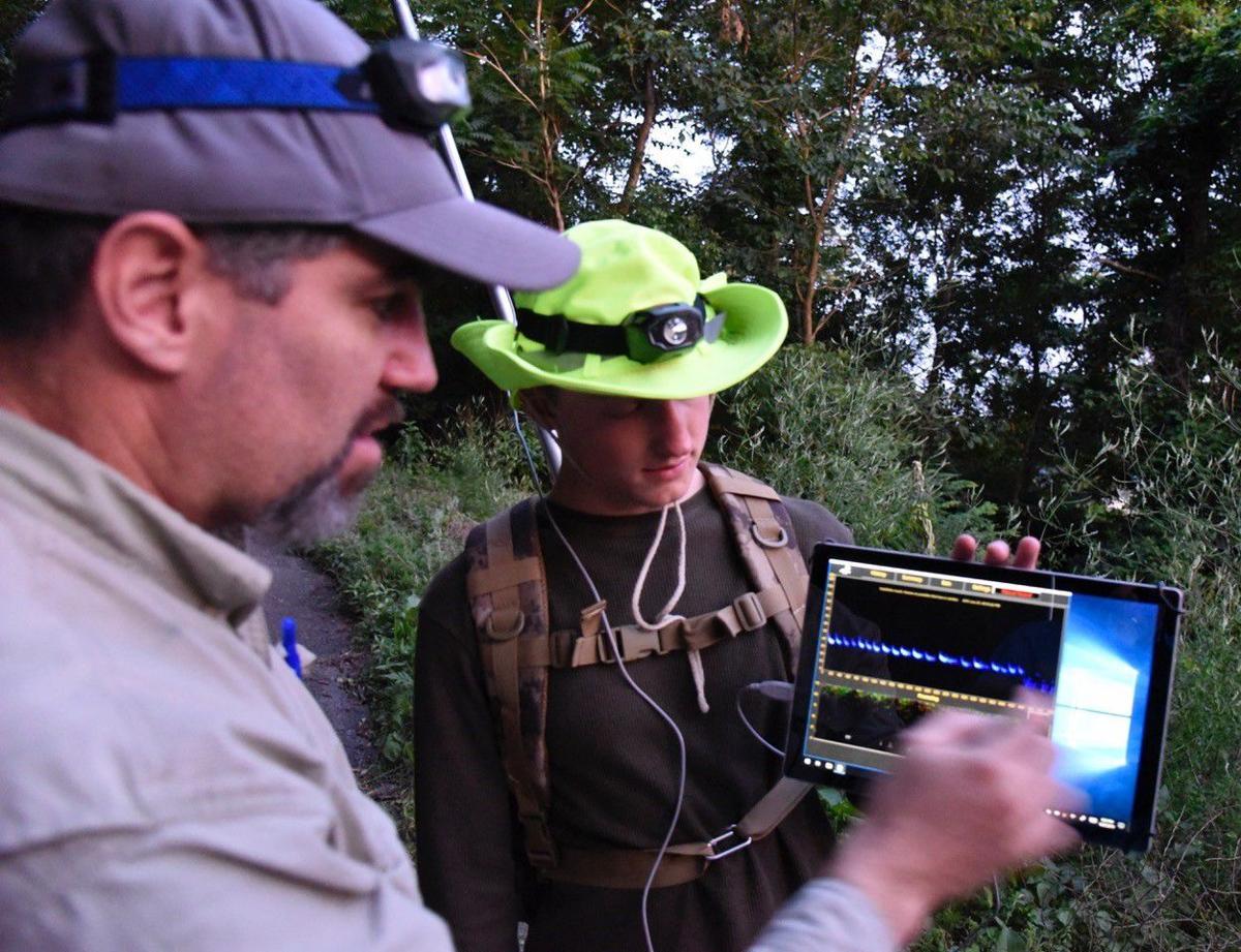bat survey readings.jpg