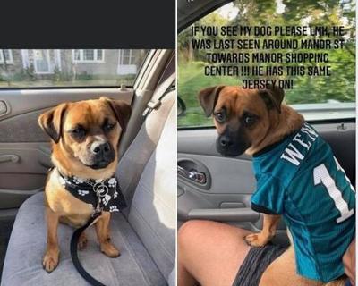 Missing dog, Milo