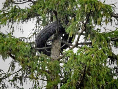 Tire in Tree