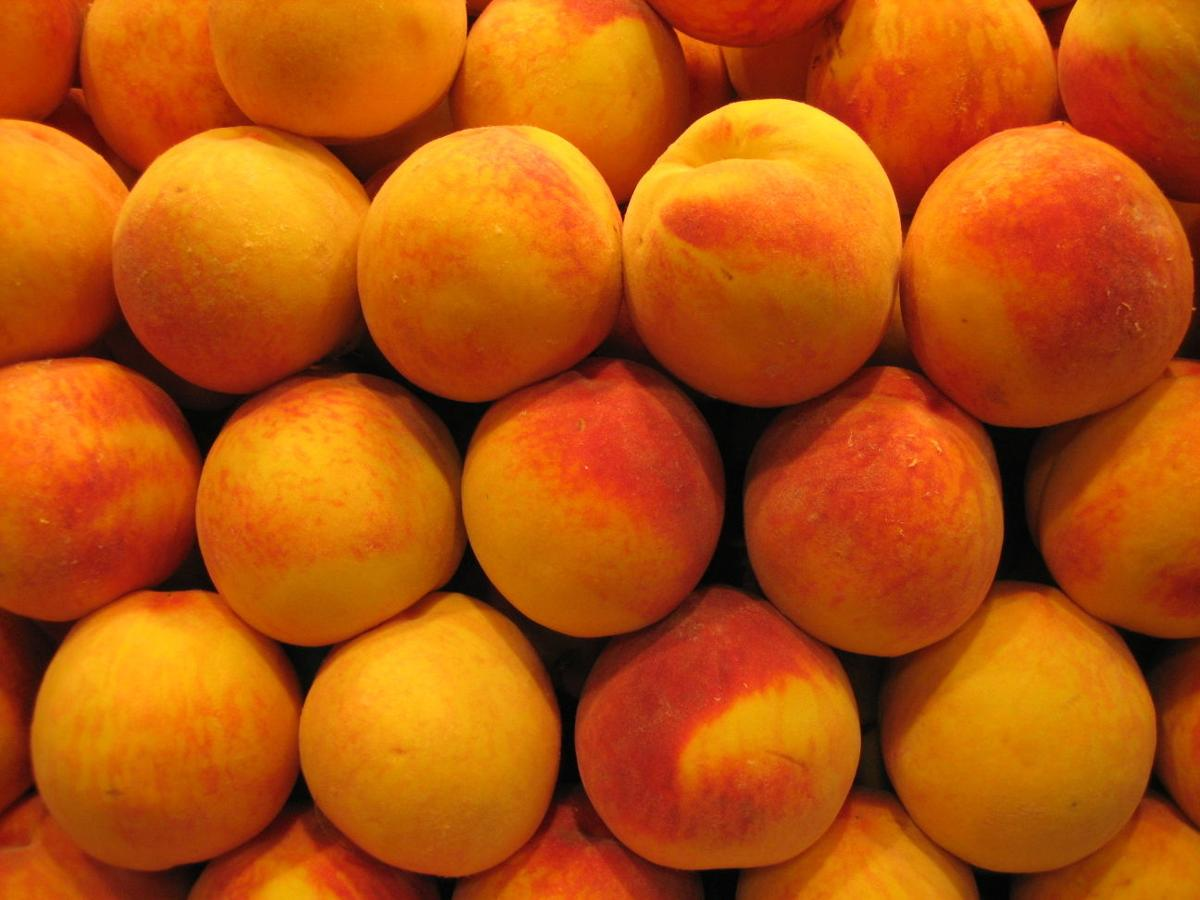 4 Places To Pick Your Own Peaches In The Lancaster County