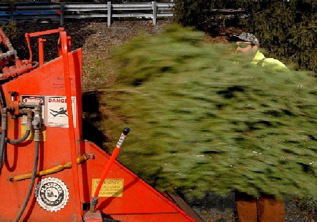 Here's Where You Can Recycle Your Christmas Tree In