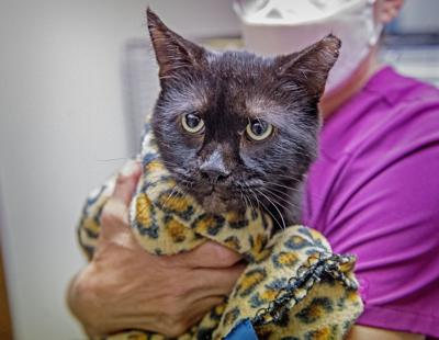 Pet of the Week Sept 17