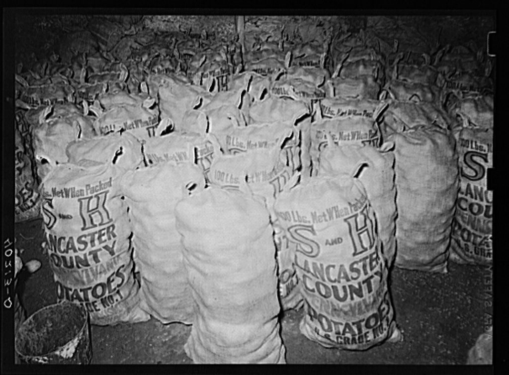 farm1 Potatoes ready for market in potato cellar on Enos royer farm 1938.jpg