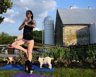 Amish Farm and House goat yoga