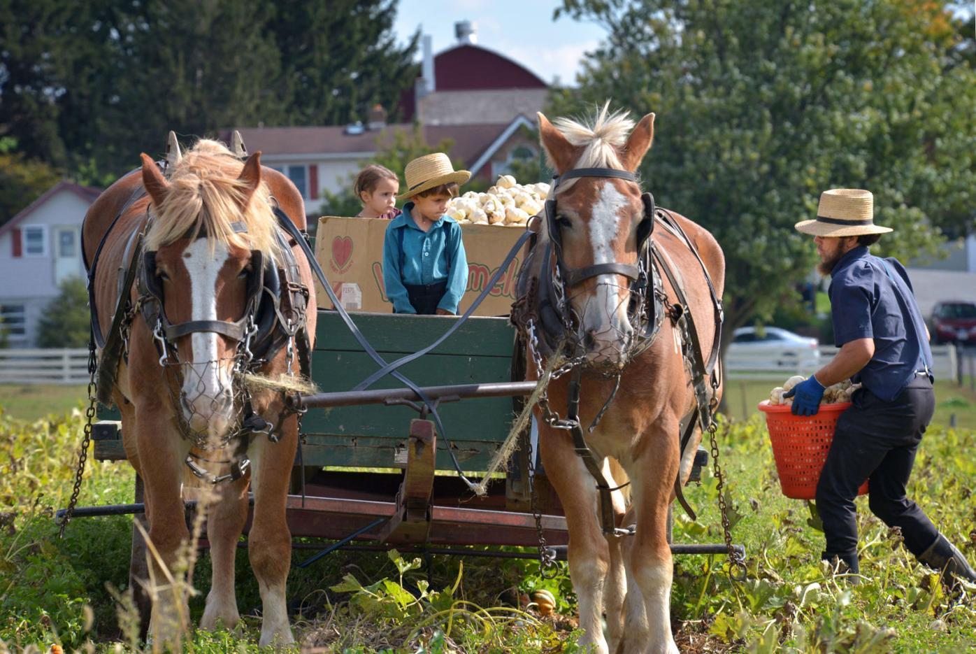 Amish farm family