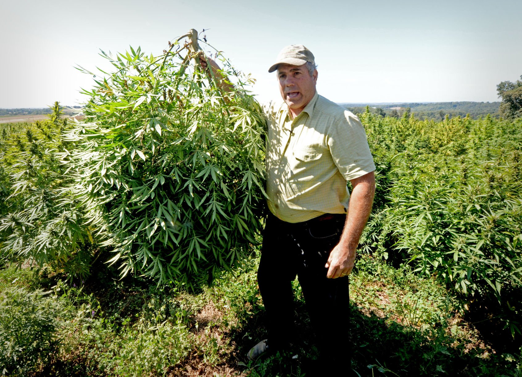 Lancaster County Harvested Its First Commercial Hemp Harvest Since 1937 Photos Video Local News Lancasteronline Com