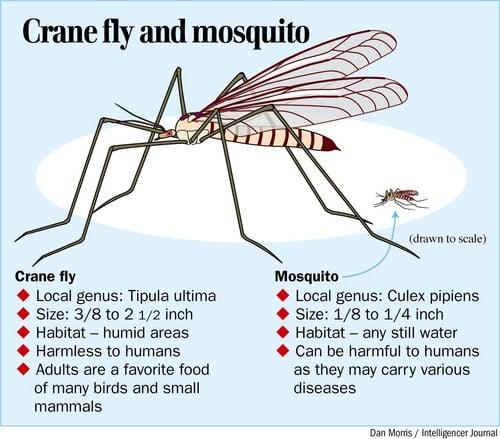 how to get mosquito proboscis osrs