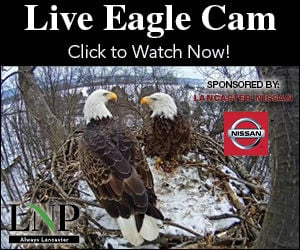 Eagle cam in York County