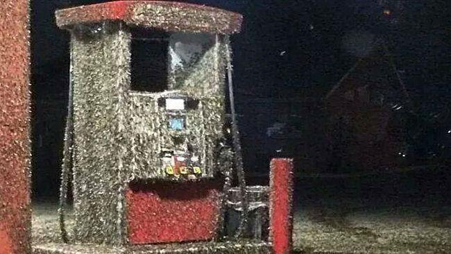 You think Columbia's mayfly invasion is bad? Check out these